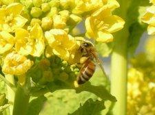 Bee640_480