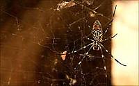 _55339444_spider