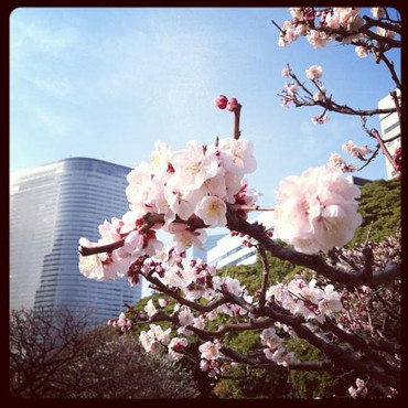 Blossoms_and_dentsu